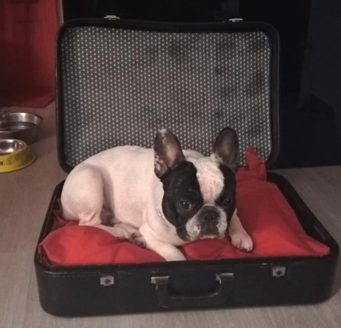 Panier pour chien DIY